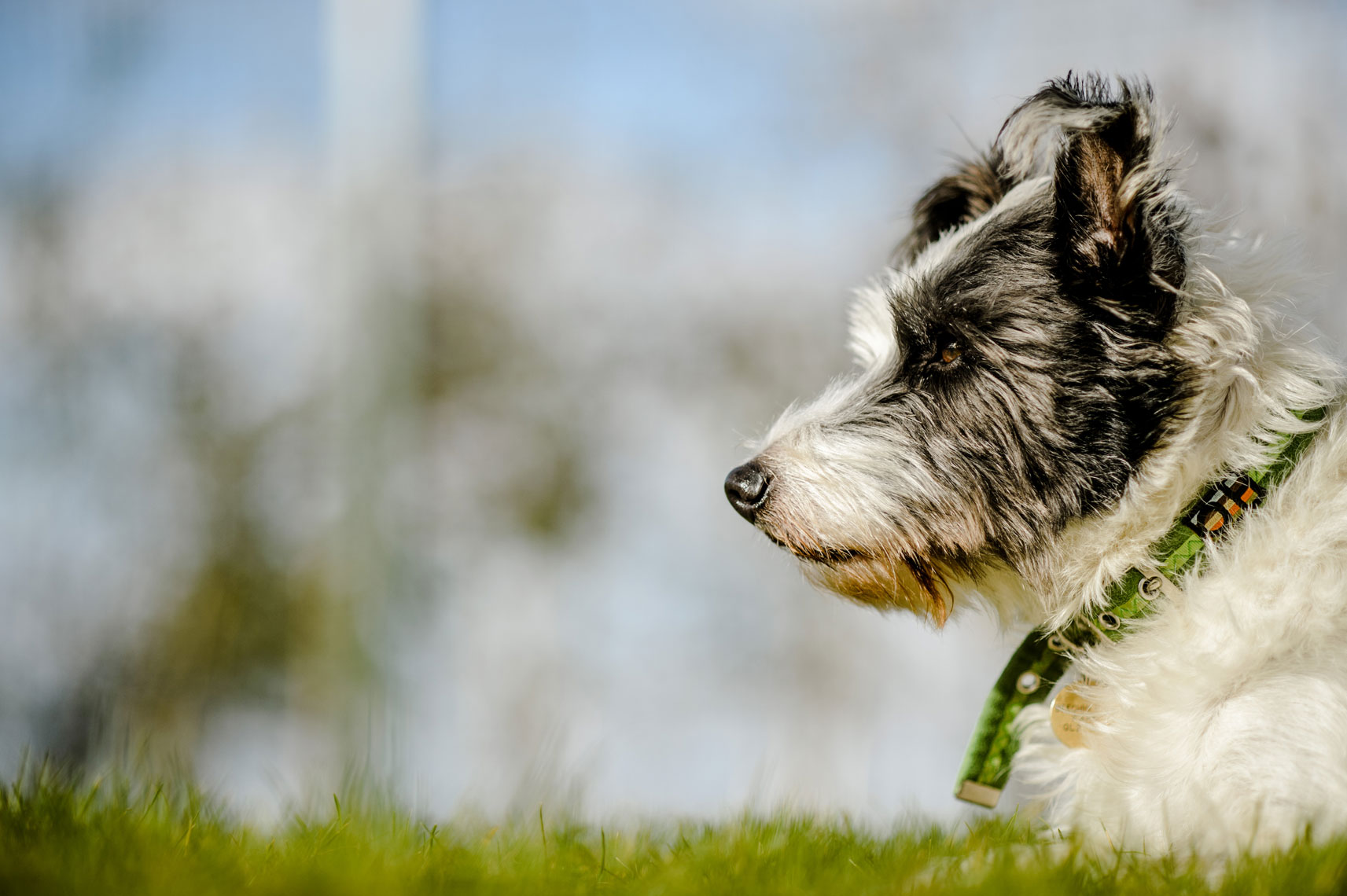 dog photographer in stroud
